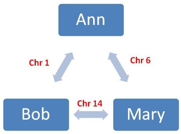 DNA matches w chrom